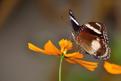 butterfly-2785699.jpg